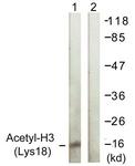 D0008-1 - Histone H3.1