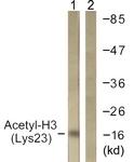 D0009-1 - Histone H3.1