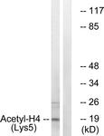 D0011-1 - Histone H4