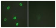 D0012-1 - Histone H4