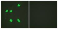 D0014-1 - Histone H4