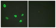 D0024-1 - Histone H2B