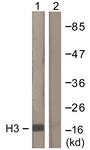 D0026-1 - Histone H3.1