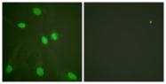 D0027-1 - Histone H3.1