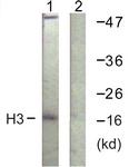 D0028-1 - Histone H3.1