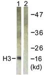 D0029-1 - Histone H3.1
