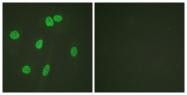 D0030-1 - Histone H3.1