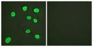 D0031-1 - Histone H4