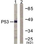 D0036-1 - TP53 / p53