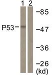 D0037-1 - TP53 / p53