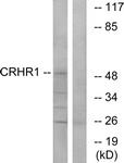 G072-1 - CRHR1