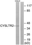 G075-1 - CYSLTR2