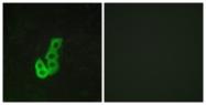 G076-2 - Dopamine D1 receptor