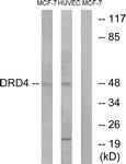 G079-1 - Dopamine D4 receptor