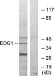 G082-1 - EDG1 / S1P1