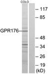 G115-1 - GPR176