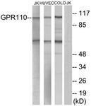 G122-1 - GPR110 / PGR19