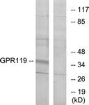G125-1 - GPR119