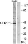 G137-1 - GPR151 / PGR7