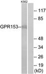 G139-1 - GPR153 / PGR1