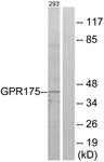 G146-1 - GPR175 / TPRA1