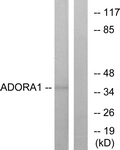G201-1 - Adenosine receptor A1
