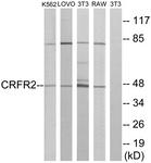 G228-1 - CRHR2
