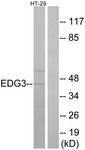 G235-1 - EDG3 / S1P3