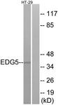 G237-1 - EDG5 / S1P2