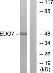 G239-1 - EDG7 / LPAR3