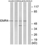 G246-1 - EMR4P / GPR127