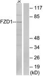 G254-1 - FZD1 / Frizzled-1