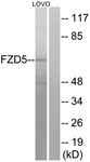 G259-1 - FZD5 / Frizzled-5