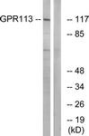 G283-1 - GPR113 / PGR23
