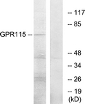 G285-1 - GPR115 / PGR18