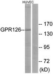 G290-1 - GPR126