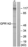 G296-1 - GPR142 / PGR2