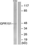 G302-1 - GPR151 / PGR7
