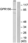 G305-1 - GPR156 / PGR28
