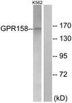 G307-1 - GPR158