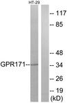 G310-1 - GPR171 / H963