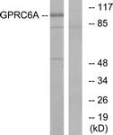 G321-1 - GPRC6A / GPCR33