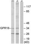 G326-1 - GPR18 / NAGly receptor