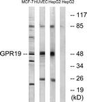 G327-1 - GPR19