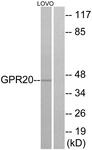 G328-1 - GPR20