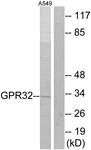 G335-1 - GPR32