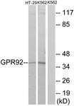 G360-1 - LPAR5 / GPR92 / GPR93