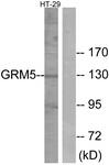 G365-1 - mGluR5 / GRM5