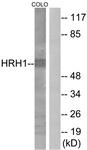 G369-1 - Histamine H1 receptor