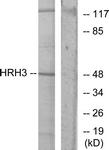G371-1 - Histamine H3 receptor